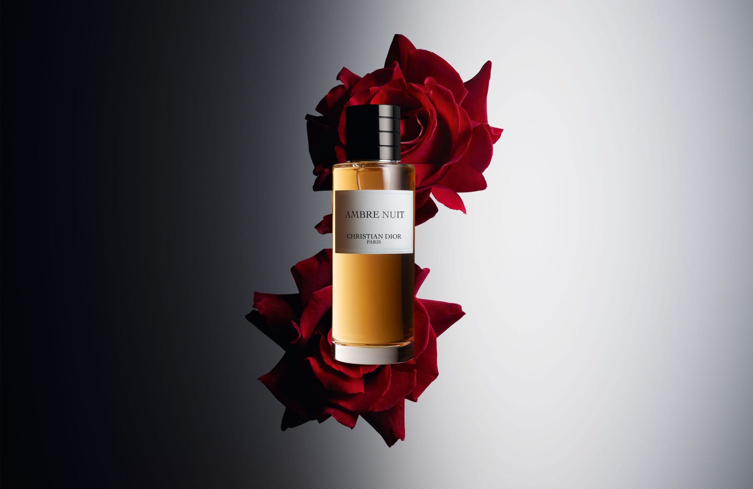Image result for Ambre nuit